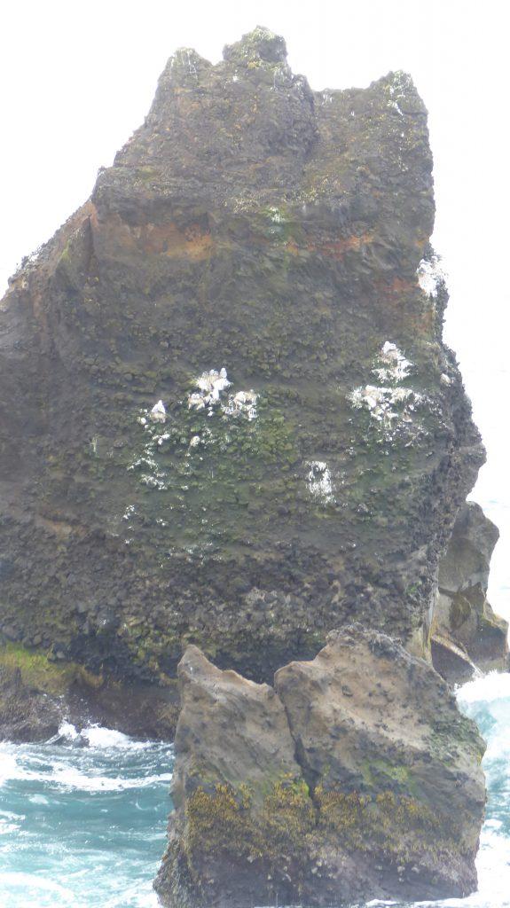 Valhnukar-fågelklippa